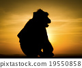 Silhouette of monkey in sunset 19550858