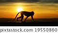 Silhouette of monkey in sunset 19550860