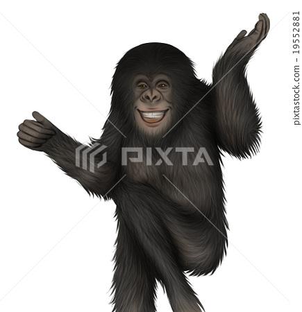 現實的黑猩猩插圖(揮手) 19552881