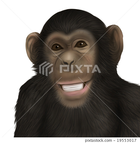 Realistic chimpanzee illustration (smile) 19553017