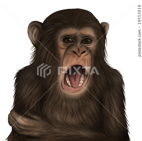 現實的黑猩猩插圖(噁心的臉) 19553019