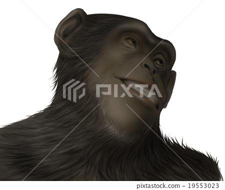 現實的黑猩猩插圖(Doya臉2) 19553023