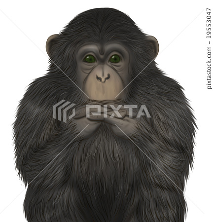 現實的黑猩猩插圖(把手放在一起) 19553047
