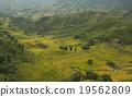เวียดนาม,ข้าว,พื้นหญ้า 19562809