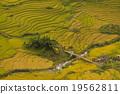 เวียดนาม,ข้าว,พื้นหญ้า 19562811