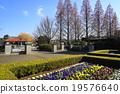 ฤดูใบไม้ร่วง,แปลงดอกไม้,สวน 19576640