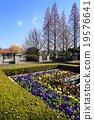 ฤดูใบไม้ร่วง,แปลงดอกไม้,สวน 19576641