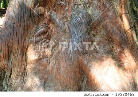 Ise shrine power tree 19580468