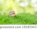 The journey of snail. 19585943