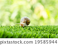 The journey of snail. 19585944