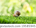 The journey of snail. 19585945