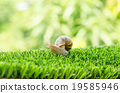 The journey of snail. 19585946