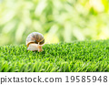 The journey of snail. 19585948