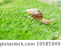 The journey of snail. 19585949