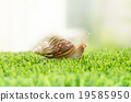 The journey of snail. 19585950