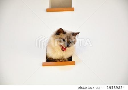 猫 猫咪 小猫 19589824
