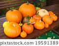 food, autumn, harvest 19591389