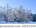 snow scene, frost covered tree, snow 19591444