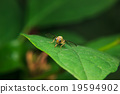 insect on green leaf 19594902