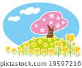 벚꽃, 유채, 평지꽃 19597216