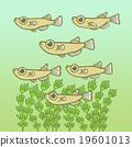 killifish, medaka rice fish, fish 19601013