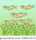 killifish, medaka rice fish, fish 19601014