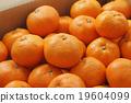橘子 蜜柑 桔子 19604099