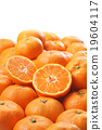蜜柑 水果 冬之味 19604117