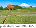 茶園 世界文化遺產 富士山 19604653
