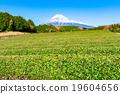 茶園 世界文化遺產 富士山 19604656