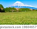 茶園 世界文化遺產 富士山 19604657