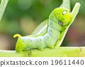 애벌레, 녹색, 초록색 19611440