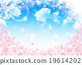 樱花 樱桃树 春天 19614202