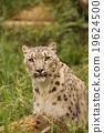 猫科 肉食动物 哺乳动物 19624500