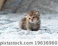 Cute kitten 19636960