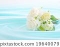 花朵 花 花卉 19640079