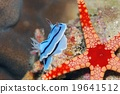 海參 生物 活的東西 19641512