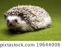 Hedgehog, bright colorful vivid theme 19644006