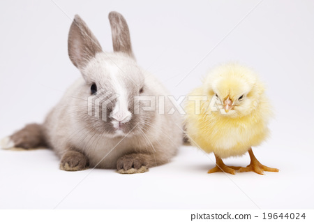 Stock Photo: Rabbit and chick, springtime colorful bright theme
