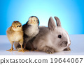 Rabbit and chick, springtime colorful bright theme 19644067