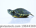 Nice Turtle isolated on white 19644369