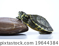 Nice Turtle isolated on white 19644384