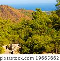 olympos  mountain bush   19665662