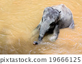 elephant bathing in the river  19666125