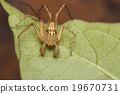lynx spider on a leaf 19670731