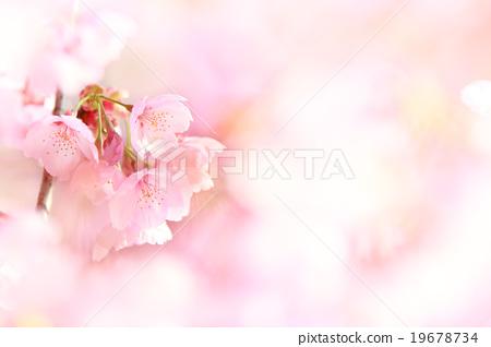 벚꽃 19678734