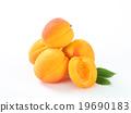 fresh, fruit, apricots 19690183