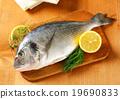 Fresh sea bream on cutting board 19690833