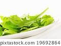 蔬菜 绿色植物 绿叶蔬菜 19692864