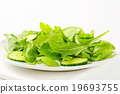 芝麻菜 沙拉 色拉 19693755